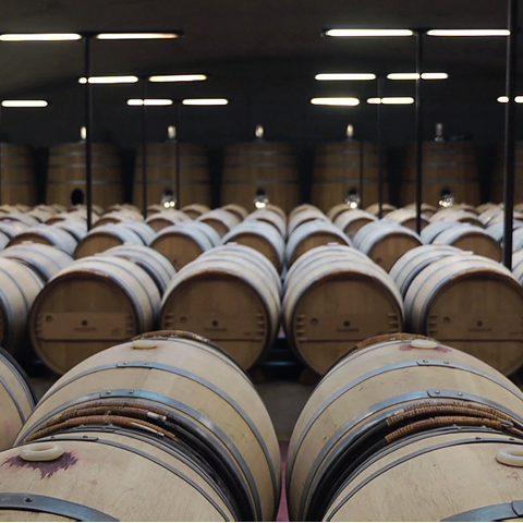 DISCOVER OUR