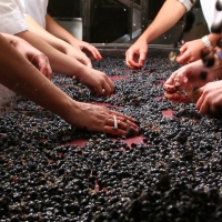 Valquejigoso - The Winery - Grape selection in the winery